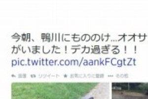 「オオサンショウウオ」をオタマジャクシと勘違い 「放射能の影響で巨大化!」ツイートが炎上