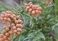 花粉症防御の新商品が続々 ジェルやミスト、スプレー式...