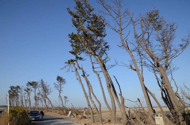 津波で大きな被害を受けた仙台市若林区荒浜(2013年3月)