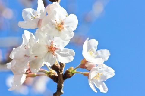 3年待ちました! キャンディーズの「春一番」がカラオケで歌える(画像はイメージ)
