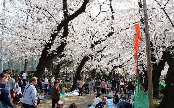 平日にもかかわらず多くの人でにぎわう上野公園