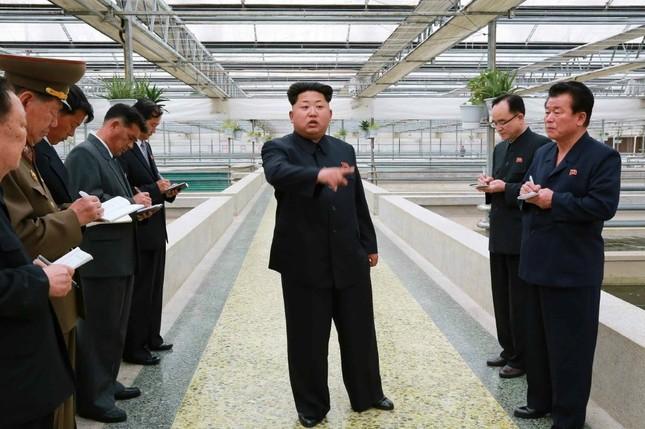 スッポン工場を視察する金正恩第1書記。朝鮮労働党の機関紙、労働新聞が2015年5月19日付けの1面で報じた