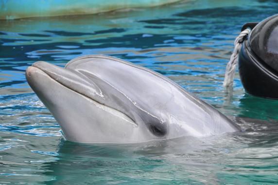 水族館の人気者、どうなる?(画像はイメージ)