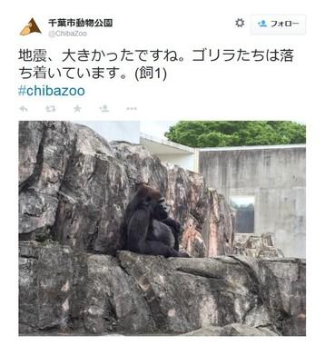 人間の慌てっぷりに比べたら…(画像は千葉市動物園によるツイートのスクリーンショット)