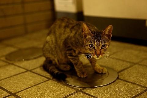 子ネコも被害に(写真と記事とは関係ありません)