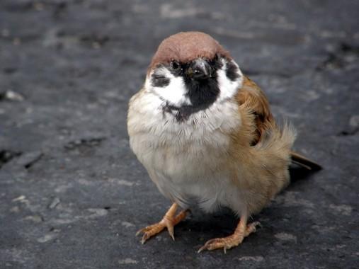 雀を殺すとどんな罪に問われるのか