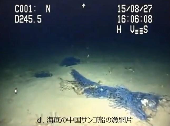 沖縄の海が「白い砂漠」に(画像は、水産庁がホームページ上で公開した調査動画のスクリーンショット)