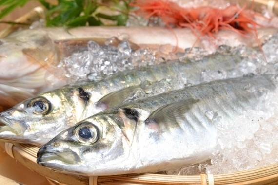 魚を毎日食べよう
