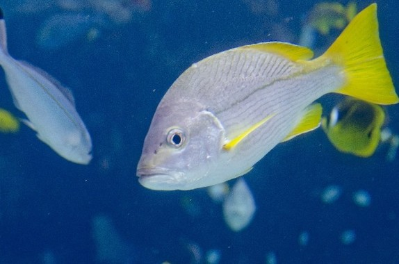 異常な寒波が来襲! 沖縄では魚が寒さで仮死状態に… (写真はイメージ)