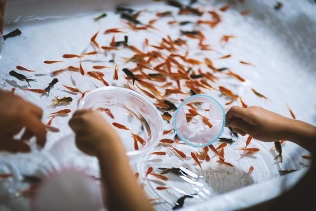 餌の与え方が違うと難癖をつけ娘が世話をしていた30匹以上の金魚の死骸を無理やり食べさせた(写真はイメージ)