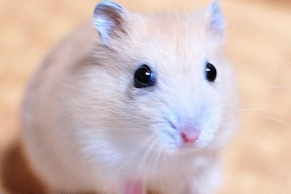 実は「好き者」だったネズミ