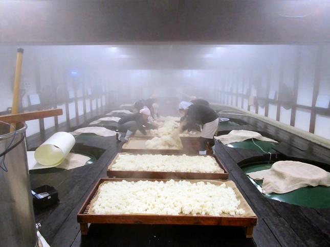 仕込み蔵で、蒸米を広げて冷ます