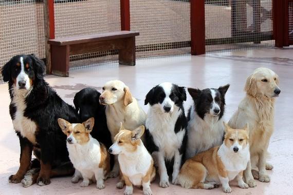 一度、ペットを一緒に避難訓練をしておくとよい。(写真はイメージ)