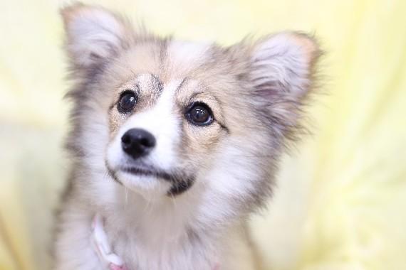 札幌市の動物愛護条例への期待広がる
