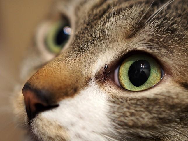 猫カフェは癒される場所なのに癒してくれる猫は店で虐待を受けていた。東京で全国初の営業停止処分(写真はイメージ)