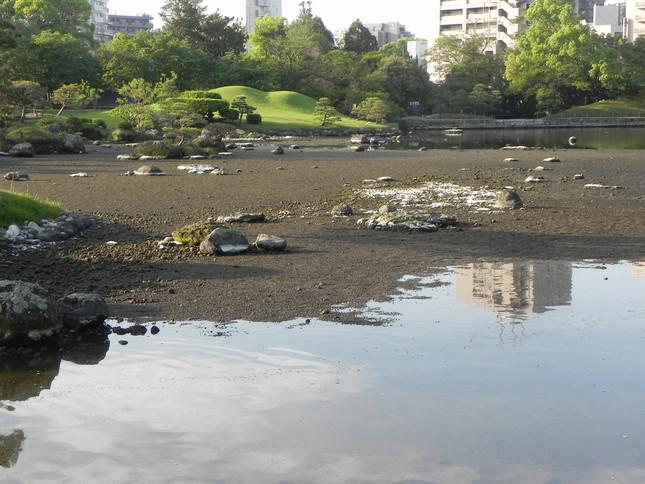 池の水が干上がった水前寺公園の風景(画像は水前寺成趣園提供)
