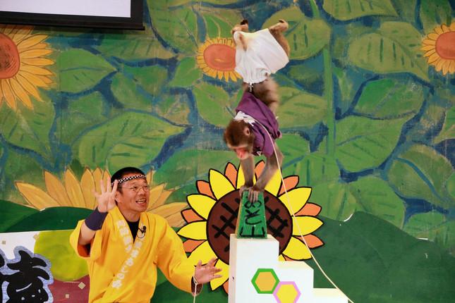 元気いっぱいに芸を披露する15歳のサル「くり松」と調教師のかき松さん