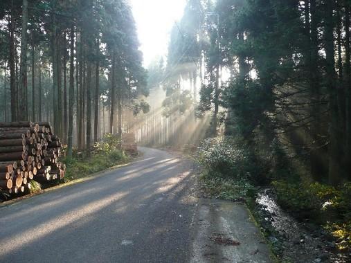 北海道の山林で行方不明になっていた男児が6月3日朝、無事保護された(写真はイメージ)