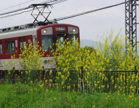 「乳首おじさん」は5月21日に近鉄京都線の電車の中で、女子高校生に下半身を露出した容疑で逮捕された(写真はイメージ)