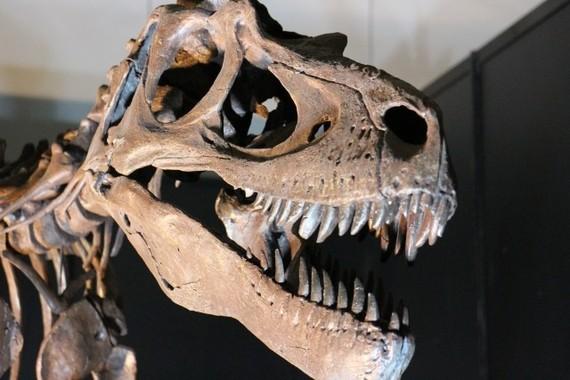 恐竜もがんには勝てない?