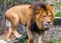 逮捕のツイート主だけが悪いのか 「ライオン逃げた」拡散騒動の「真犯人」