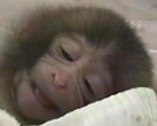 生後7日目のサルの赤ちゃんの笑顔(京都大学霊長類研究所のホームページより)