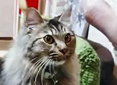 猫動画:仕事やる気も効率もアップ 低コストで人生前向きになれる
