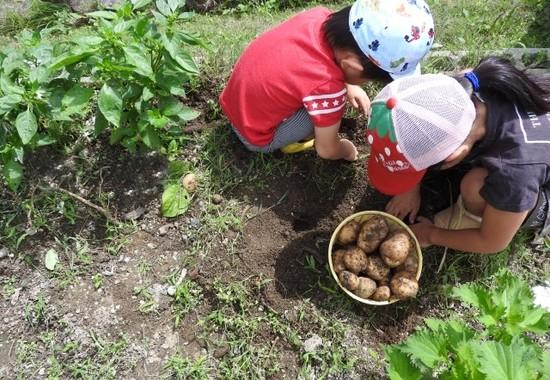 子どもの時から土に親しむと野菜好きになる
