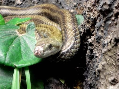 ほとんどの人が嫌いなヘビ