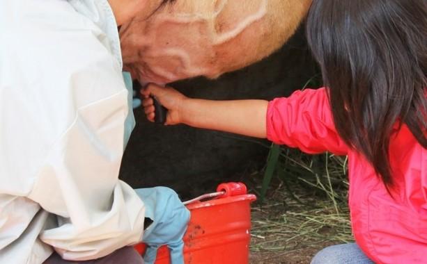 観光牧場での搾乳体験は好評なイベントだ(写真はイメージ)
