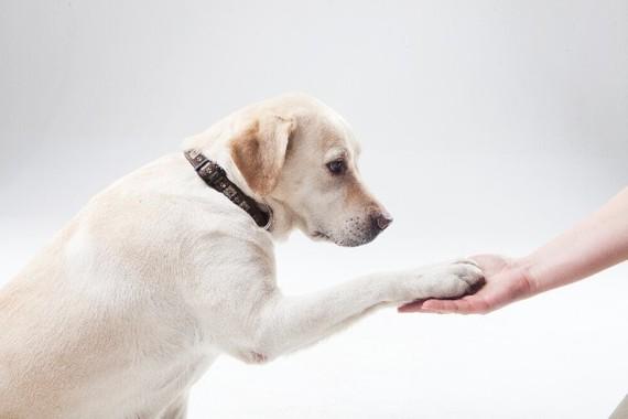 イヌは「お手」をする方が利き手