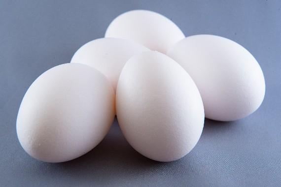 栄養の宝庫の卵