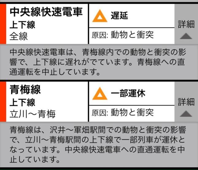 10時30分頃のJR東日本のスマートフォンアプリに配信された運行情報。「動物と衝突」が遅れの原因だと説明されている