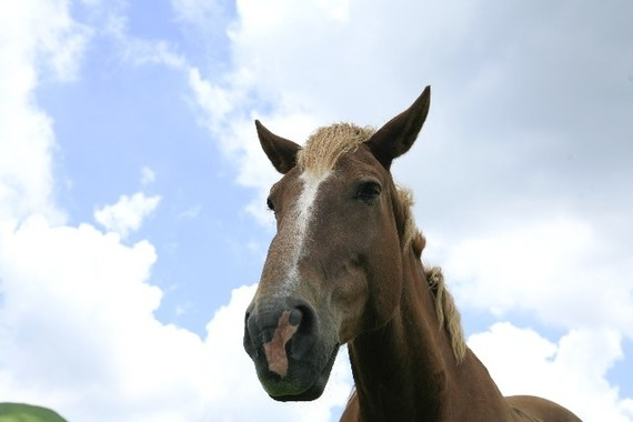 馬の賢さが凄すぎる