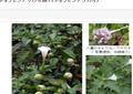 居酒屋店長が悪用した毒性チョウセンアサガオ種 「5粒1000円」でネットで買える