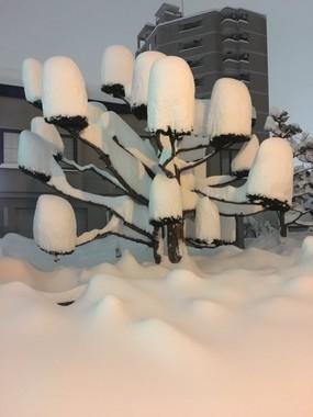 ぷーしゃん(@caspushan)さんのツイートより。たけのこのように降り積んだ雪