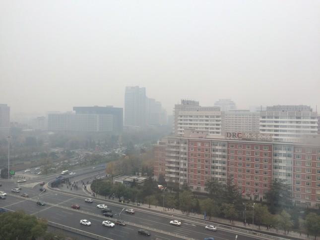 大気汚染によるアレルギーが増えている(2014年11月撮影)