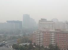 PM2.5や黄砂の危険から身を守る 微細粒子アレルギーの仕組み解明