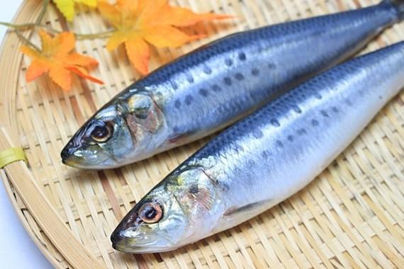 青魚をたくさん食べよう