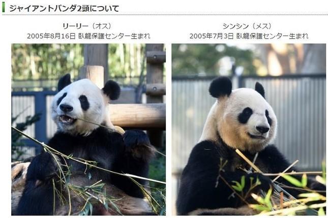 パンダの赤ちゃんに期待!(画像は、「東京ズーネット」のホームページ)