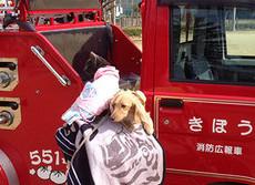 ペットの防災対策できていますか 避難所まで一緒に行く試み広がる
