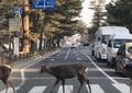 これが奈良のアビイ・ロード 「奇跡の一枚」がツイッターで拡散