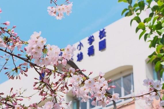 桜の季節はママに憂うつなPTAシーズン