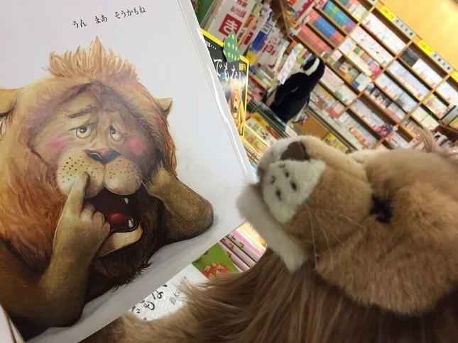 ぬいぐるみが仲良く絵本を読んだり、書店内を探検したり(岡崎義弘・岡山大学講師提供)