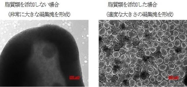 凝集塊形成後の顕微鏡写真