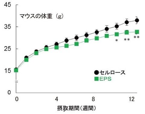 ロイコ菌EPSとセルロースを摂取したマウスの体重の変化