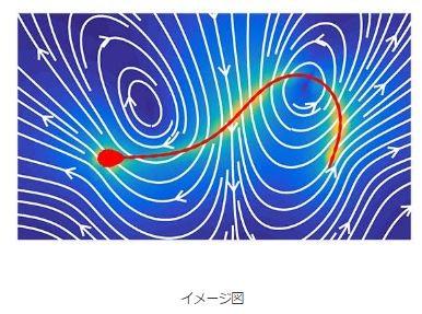 コンピューター画面上の精子の流れのイメージと、巨大な卵子に向かう「精子の旅」(提供:石本健太・京都大学特定助教)