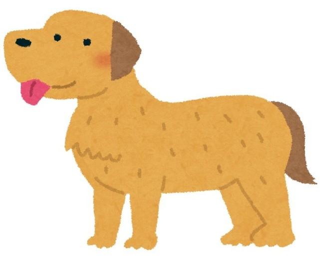 おとなしいとされる犬種だが…(画像はイメージ)