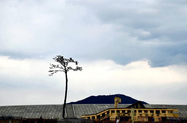 「奇跡の一本松」の背後には、高さ12.5メートルの防潮堤がつくられていた