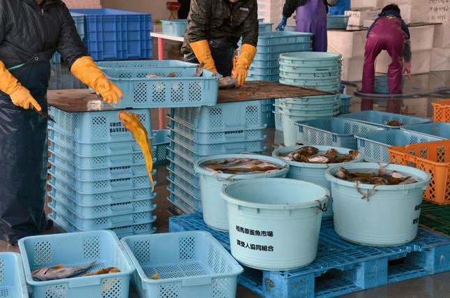 相馬原釜魚市場では、水揚げされた魚の処理が行われている(2016年12月撮影)